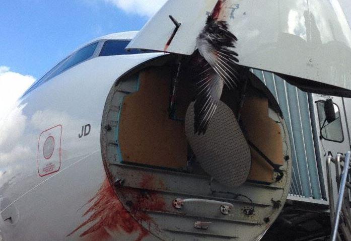 Birdstrike på A320-200 fly fra SWISS. (Foto: The Aviation Herald)
